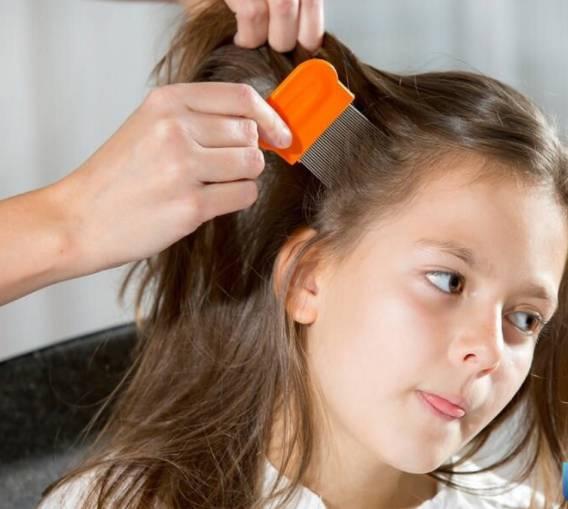 Chải tóc thường xuyên cho trẻ.