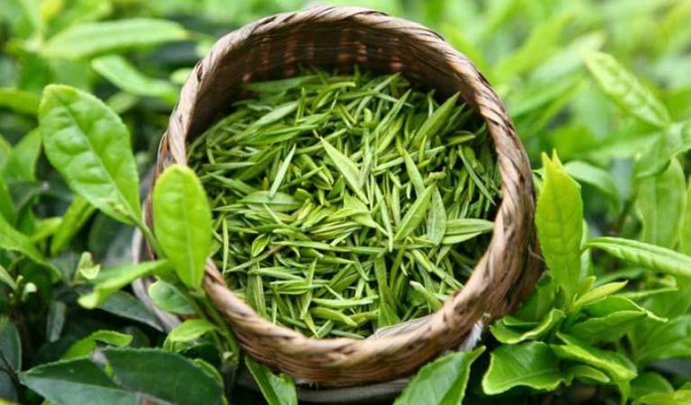 Nước trà xanh cũng tốt cho mái tóc.