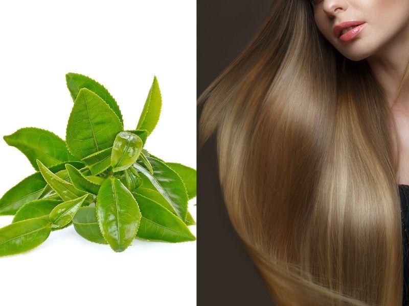 Trà xanh tươi thường được tận dụng làm tóc mượt mà hơn