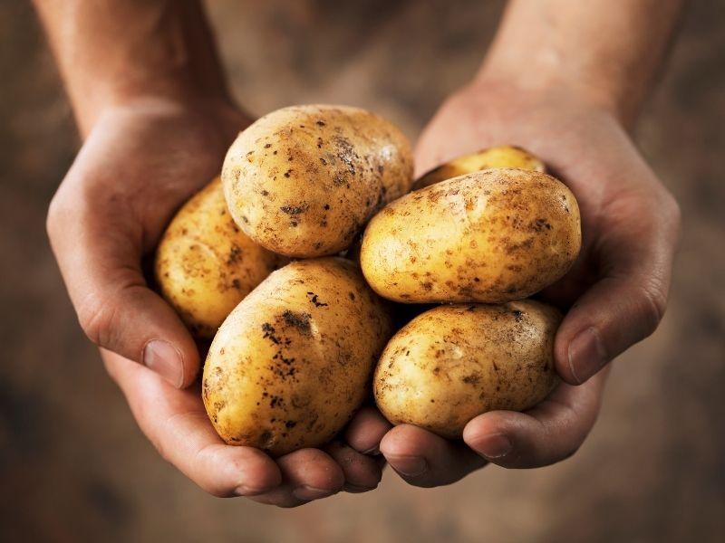 Hướng dẫn tóc mọc nhanh cho nam bằng nguyên liệu khoai tây